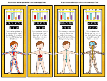 A Set of 24 HUMAN BODY SYSTEMS Bookmarks (skeletal, digest