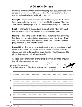 A Shark's Senses and Other Facts