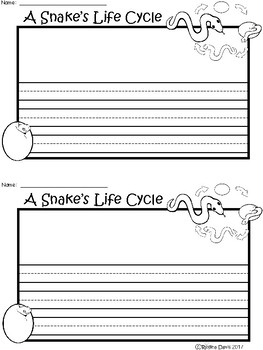 A+ Snake Life Cycle ... Writing Paper