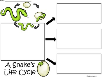 A+ Snake's Life Cycle ...Three Graphic Organizers
