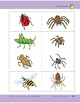 A Spider Is Not an Insect!: Storyboard Pieces