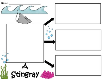 A+  Stingray ... Three Graphic Organizers