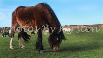 A Stock Photo of Horses