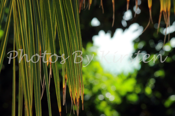 A Stock Photo of Palm Tree Close up