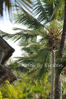 A Stock Photo of Palm Trees