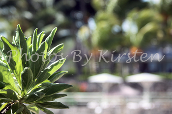 A Stock Photo of Plant with background