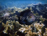 A Stock Photo of a Coral Reef with a Fish