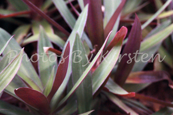 A Stock Photo of a Plant Close up