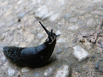 A Stock Photo of a Slug