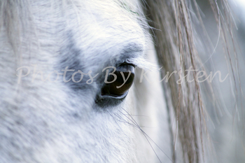 A Stock Photo of a White Horse