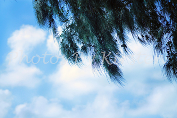 A Stock Photo of the Sky and Trees
