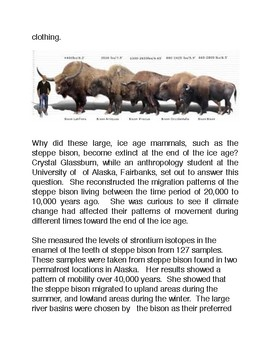 A Story of Survival: The Prehistoric Steppe Bison of Alaska