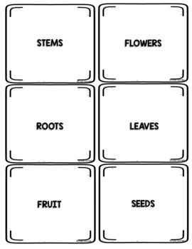 A Study of Plants for Younger Students