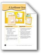 A Sunflower Grows
