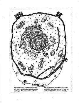 Cell Diversity: A Survey of 30 Cells