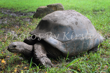 A Stock Photo of a Tortoise
