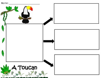 A+  Toucan... Three Graphic Organizers