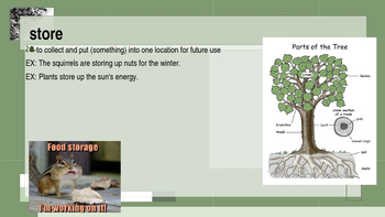 A Tree is Growing Vocabulary Powerpoint