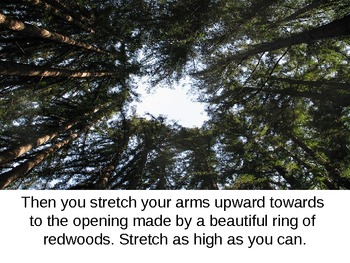 A Trip to the Redwood Forest: A Visual and Physical Exercise for Students