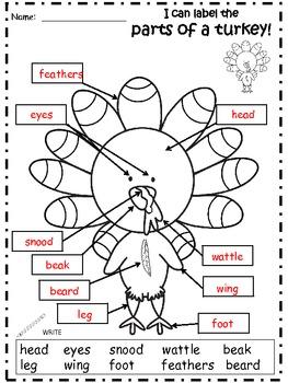 A+ Turkeys: Label The Parts Of A Turkey