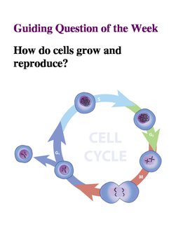 Mitosis: Bellwork for the Week!