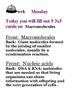 Bellwork for a Week!  Macromolecules