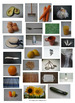 A-Z Photographs Clip Art (Set 2)