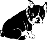 A bulldog terrier looking dog in black and white
