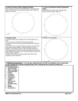 Viewing Cells Lab Worksheet