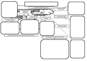 A2 Biology Respiration Mind Map