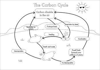 Printable carbon cycle diagram diy enthusiasts wiring diagrams a3 carbon cycle posters in color and black and white by fresh rh teacherspayteachers com carbon cycle diagram middle school co2 cycle ccuart
