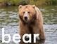 ABC Animal Photo Posters, Hi-Res Alphabet Pictures