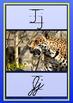 Alphabet Animal Posters (Zaner Bloser Style)