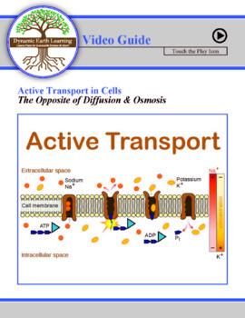 ACTIVE TRANSPORT: FuseSchool Biology Video Guide