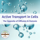Active Transport in Cells - the Opposite of Diffusion and Osmosis - Short Lesson