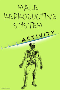 ACTIVITY - Male Reproductive System in Humans