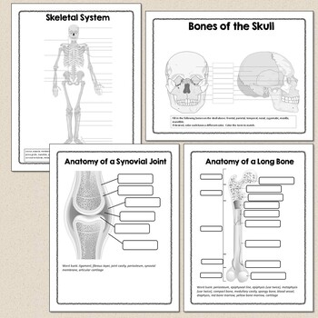 Human Body Systems or Anatomy Worksheets and Diagrams