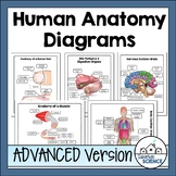 Advanced Human Body Systems or Anatomy Worksheets & Diagrams