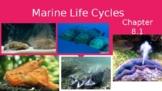 AICE Marine Science: Marine Animal Reproductive Behavior (Chapter 10)