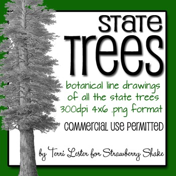 ALL 50 State TREES - Botanical drawings for Personal or Commercial Use