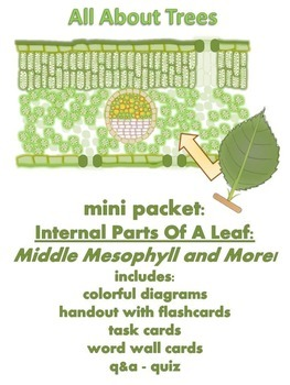 ALL ABOUT TREES - Mini Packet: Middle Mesophyll & More! (P