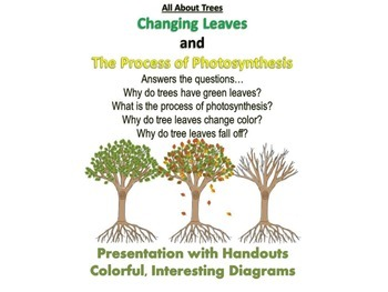 Photosynthesis presentation teaching resources teachers pay teachers all about trees changing leaves and photosynthesis presentationhandouts fandeluxe Choice Image