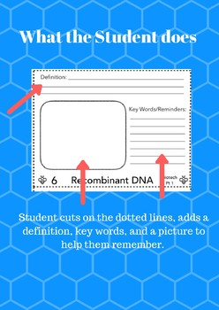ALL Buzzwords for 9th or 10th grade Biology