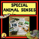 AMAZING ANIMAL SENSES 22 PHOTO SORT TASK CARDS Distance Learning
