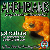 Photos Photographs AMPHIBIANS! Science and Nature Personal and Commercial Use