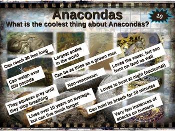 ANACONDA: 10 facts. Fun, engaging PPT (w links & free graphic organizer)