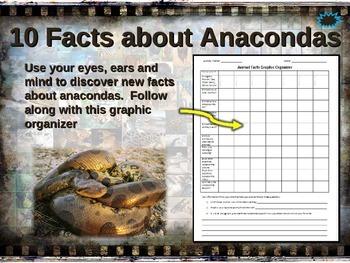 ANACONDA: 10 facts. Fun, engaging PPT (w links & free grap