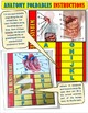 ANATOMY FOLDABLES