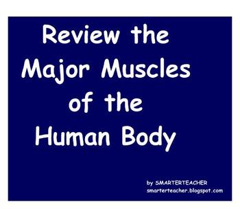 ANATOMY - SMART Notebook - Muscle Anatomy Interactive Review