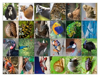 ANIMAL COVERINGS - CENTER - CUBIERTAS DE LOS ANIMALES